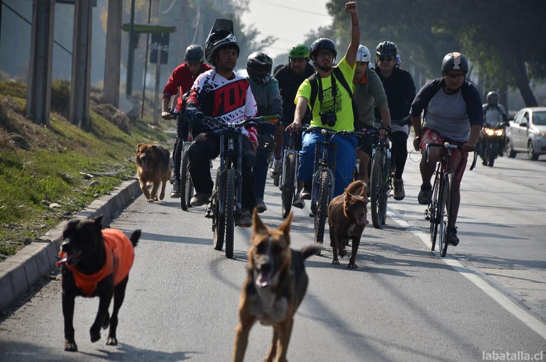 Vecinxs pedalearon nuevamente por una ciclovía en Camino a Melipilla